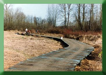 Boardwalk along old blueberry farm.